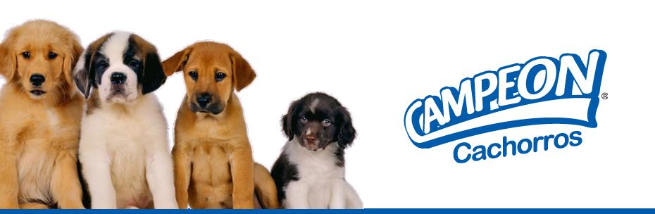 Comprar Alimento para Cachorros Campeon