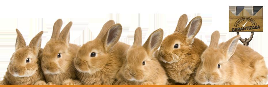 Comprar Alimento para conejos