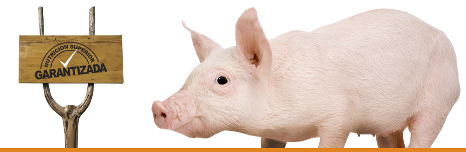 Comprar Concentrado para cerdos