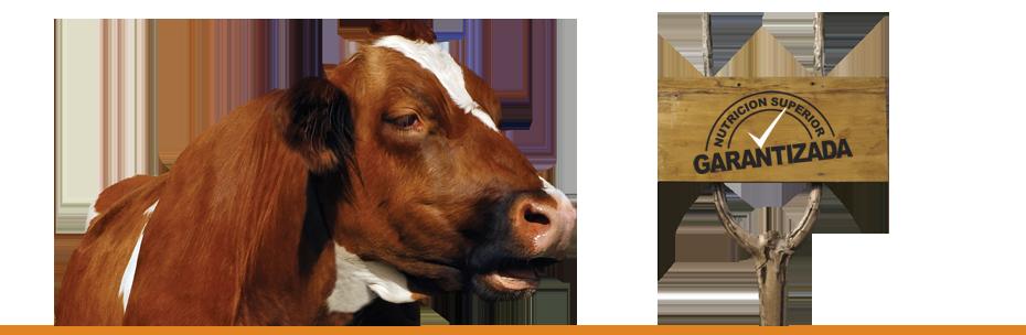 Comprar Concentrado para Vacas