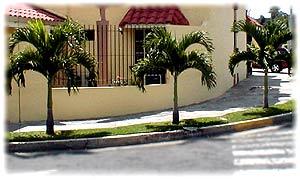 Comprar Palmera Miami, Christmas