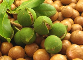 Comprar Nueces de Macadamia