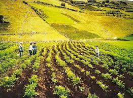 Comprar De todo para la agricultura
