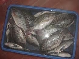 Comprar Pescado procesado