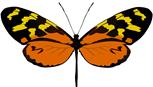 Comprar Mariposa Mechanitis polymnia