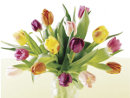 Comprar Tulipanes