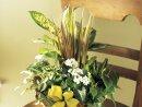 Comprar Plantas Naturales
