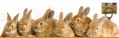 Alimento para conejos