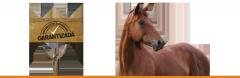 Alimento peletizado para caballo