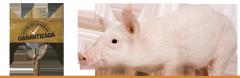 Concentrado para cerdos