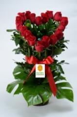 """Arreglo de rosas """" Corazon Rosa"""""""