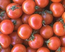 Salsa Catsup y Pasta de Tomate