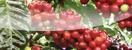 Fertilizante Fórmula Química Grado 15-5-15