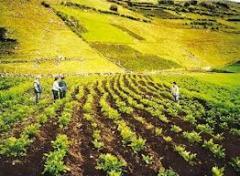 De todo para la agricultura