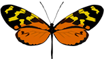 Mariposa Mechanitis polymnia