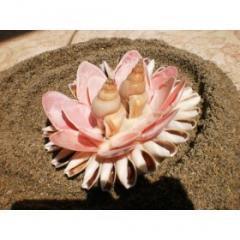 Psico-Modelo 5007 - Flor del Mar que esconde a los