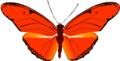 Mariposa Dryas julia