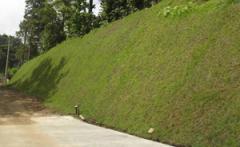 Estabilizacion de taludes, reforestacion y manejos